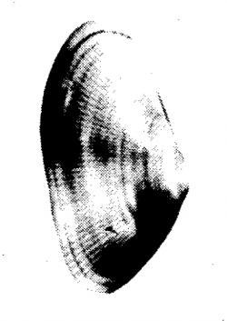 Marucha